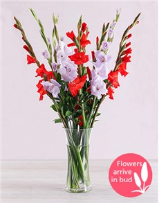 flowers: Purple and Red Gladiolus Vase!