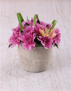 flowers: Pink Daisies in a Pottery Vase Petite!