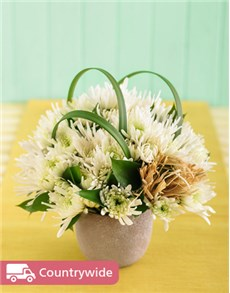 gifts: White Daisies in a Pottery Vase Petite!