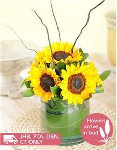 flowers: Cylinder Vase of Sunflowers!