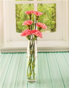 flowers: Simply Six Pink Carnations!