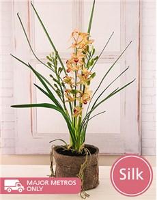 flowers: Cymbidium Silk Orchid!