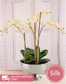 flowers: Silk Phalaenopsis Orchid In Silver Bowl!