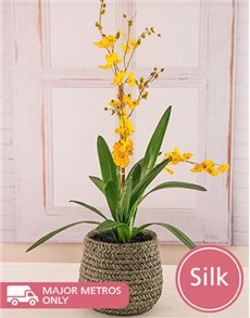 flowers: Dancing Silk Orchid!
