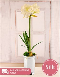 flowers: White Silk Amaryllis in Silver Julep Cup!