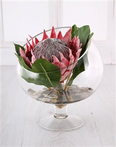 flowers: King Protea in a Glass Vase!