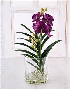 flowers: Vanda Orchid in a Glass Vase!