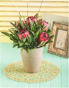 flowers: Proteas in Pottery Vase!