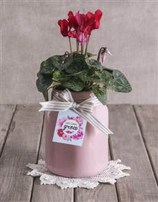 plants: Red Cyclamen in Pink Container!