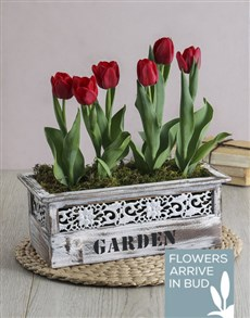 plants: Red Potted Tulips in Garden Wooden Box!