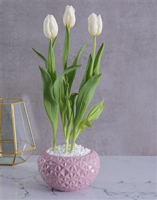 plants: White Tulip in Pink Geo Planter!