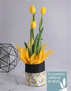 plants: Yellow Tulip in Fabric Pot Cover!