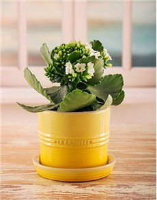 gifts: Yellow Le Creuset Planter!
