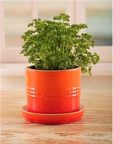 gifts: Le Creuset Orange Planter!