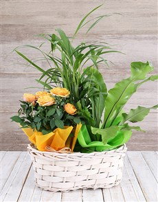 plants: Rose Bush and Plant Basket!