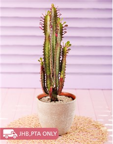 plants: Tall Cactus in a Beige Pot!