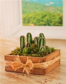 flowers: Cacti Collection in a Square Wooden Box!