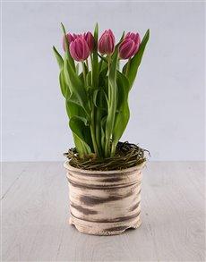 flowers: Tulips in a Ceramic Pot!