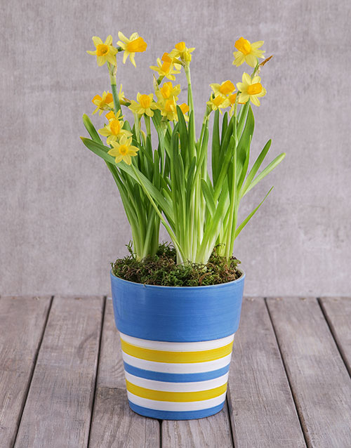 mothers-day: Bright Sunny Pot!