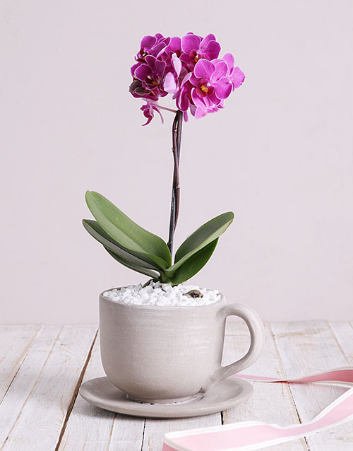 mothers-day: Pink Midi Orchid in Ceramic Pot!