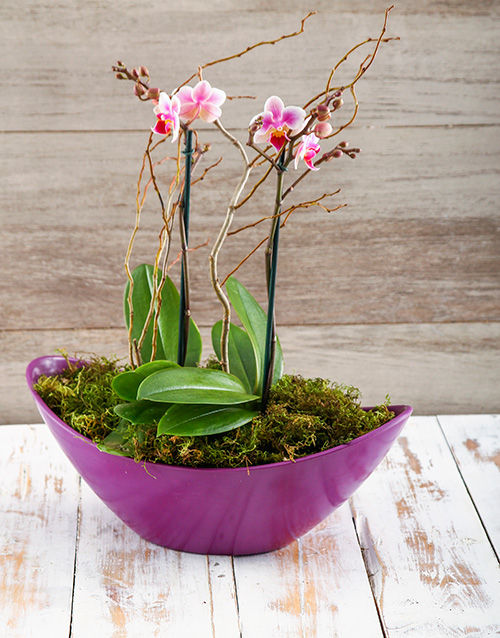 mothers-day: Orchids in a Boat!