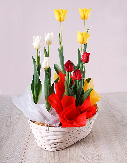 mothers-day: Mixed Tulip Basket!