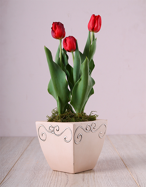 mothers-day: Red Tulips in Ceramic Pot!