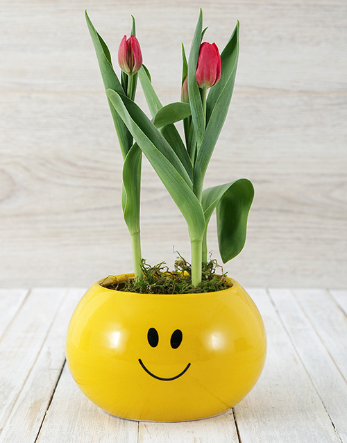 flowering: Red Tulip Plant in Smiley Pot!