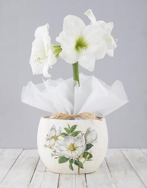 lily: White Amaryllis in Ceramic Flower Pot!