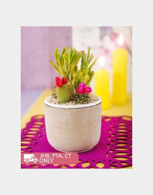 cacti: Garden Cacti in Pottery Vase!