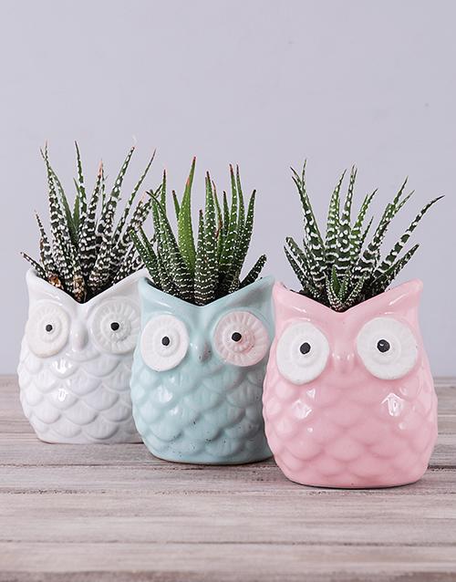 teachers-day: Ceramic Owl with Succulent!