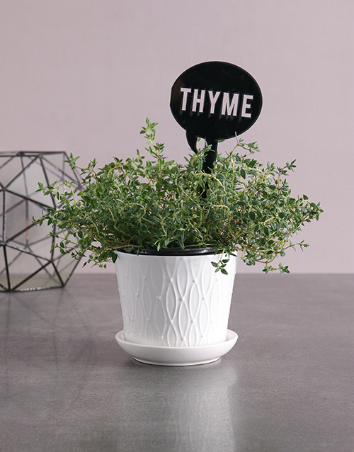 whats-new: Herb Plant in White Pot!