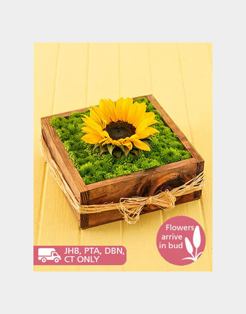 sunflowers: Sunflower and Sprays in a Wooden Box!