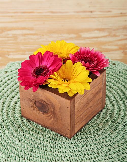 colour: Mini Gerberas in Wooden Box!