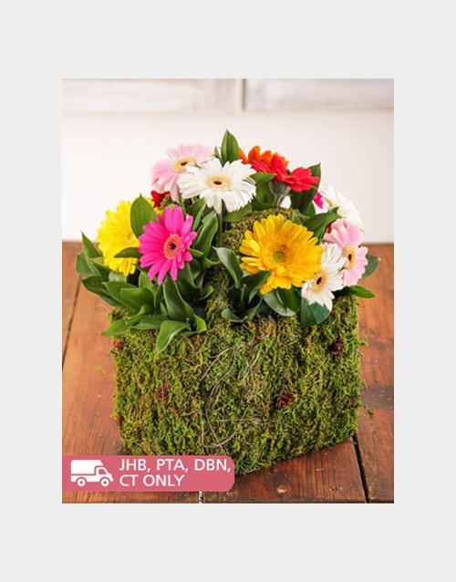 gerbera-daisies: Moss Basket of Assorted Mini Gerberas!