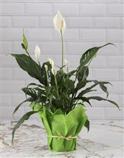 Gourmet Peace Lily Basket