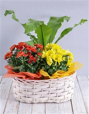 A woven basket filled with pretty bright flowering