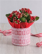 Kalanchoe Plant in Red Embossed Cement Pot