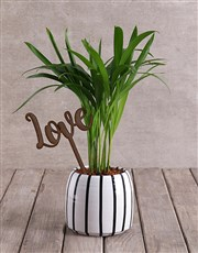 Love Palm with Wooden Love Cutout