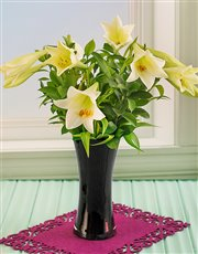 St Joseph Lilies in a Tall Black Glass Vase