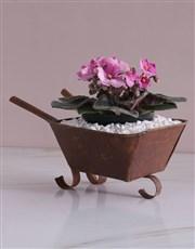 African Violet in Mini Wheelbarrow