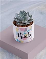 Thanks Succulent In White Ceramic Pot