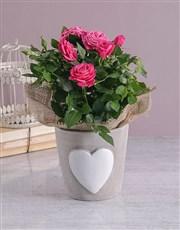 Heartfelt Rose Bush