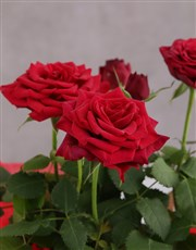 Red Rose Bush Just For You