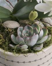 Midi Orchid Garden In A Pot