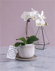 Personalised Orchids In A Pot