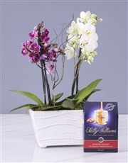Pink And White Orchids In A Ceramic Tub