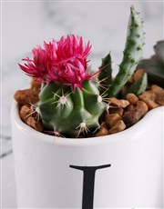 Cacti and Succulents in Love Pot
