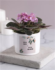 Life In Full Bloom African Violet