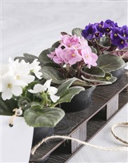Personalised African Violet Crate